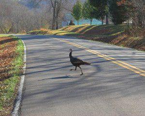 Thanksgiving Safe Driving